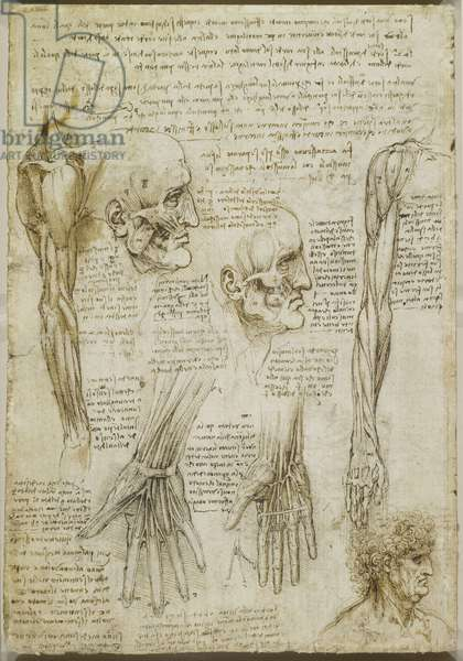 erso: The muscles of the face and arm, and the nerves and veins of the hand, c.1510-11 (black chalk, pen & ink and wash on paper)