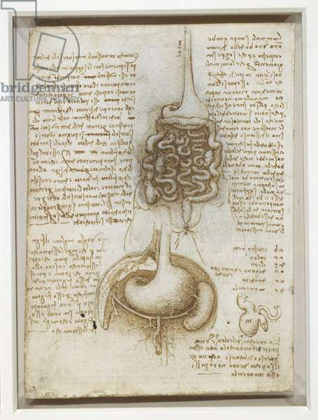 The stomach and intestines, c.1508-09 (pen and ink over black chalk on paper)