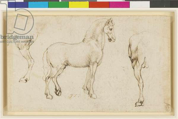 Studies of horses, c.1478-80 (leadpoint, pen & ink on paper)