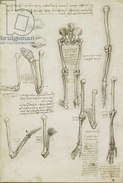 Recto: The bones of the arm and leg, c.1510-11 (pen and ink with wash, over black chalk on paper)