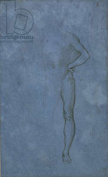 A male nude, c.1485-90 (metalpoint and touches of pen and ink on blue prepared paper)