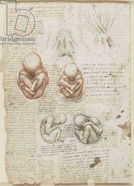 Recto: The fetus, and the muscles attached to the pelvis, c.1511 (red and black chalks, pen and ink, wash on paper)