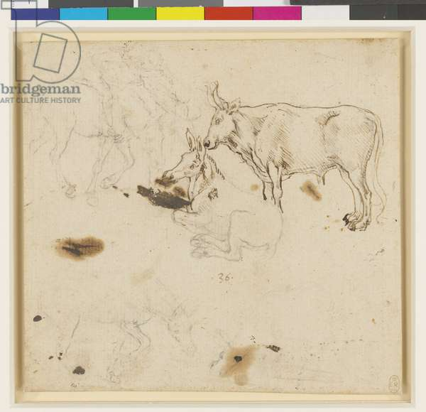 An ox and ass, and other studies of asses, c.1478-80 (leadpoint, pen & ink on paper)