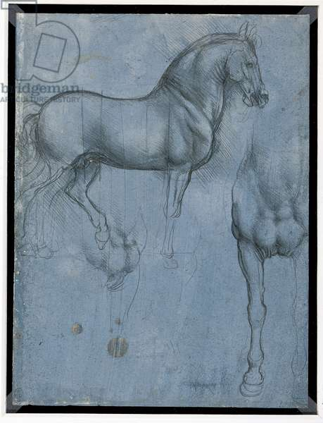 A horse in profile, and from the front (metalpoint on paper)