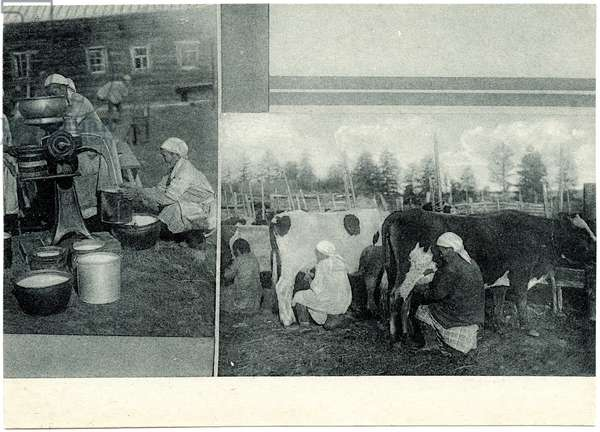 Milking the Cows at the Stalin Commune in Yakutia, c.1930