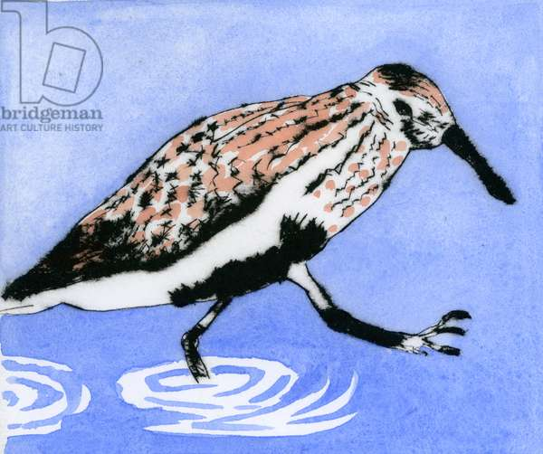 Splish Splash, 2015 (drypoint and watercolour)
