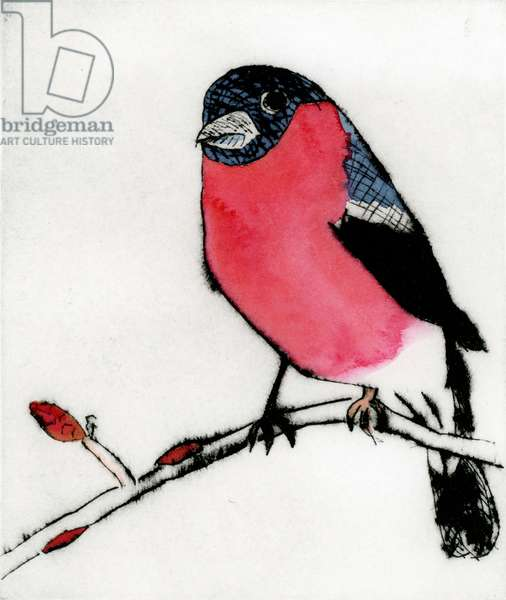 Spring Bullfinch, 2015 (drypoint and watercolour)