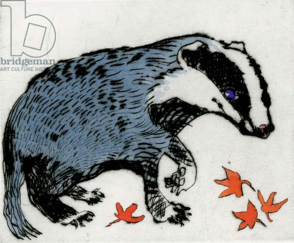 Badger Cub, 2009 (drypoint and watercolour)
