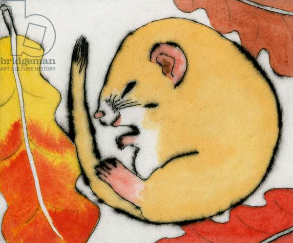 Dreaming Dormouse, 2013 (drypoint and watercolour)