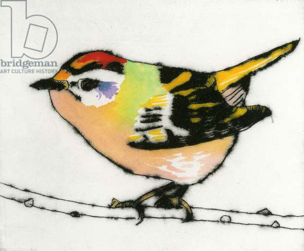 Feisty Firecrest, 2013 (drypoint and watercolour)