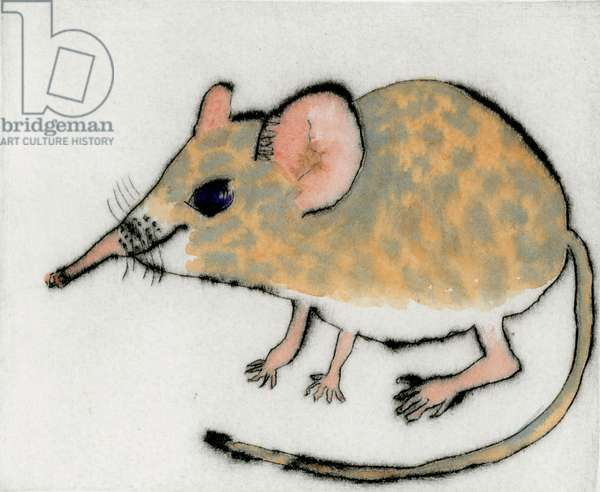 Shrew, 2013 (drypoint and watercolour)
