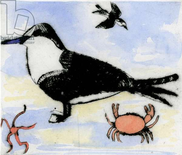 Tern, 2015 (drypoint and watercolour)