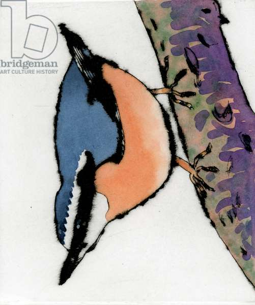 Nuthatch, 2015 (drypoint and watercolour)