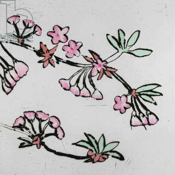 Cherry Blossom, 2001 (drypoint and watercolour)