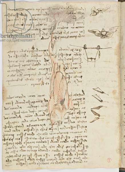 Birds Flight Code, c. 1505-06, paper manuscript, cc. 18, sheet 17 verso