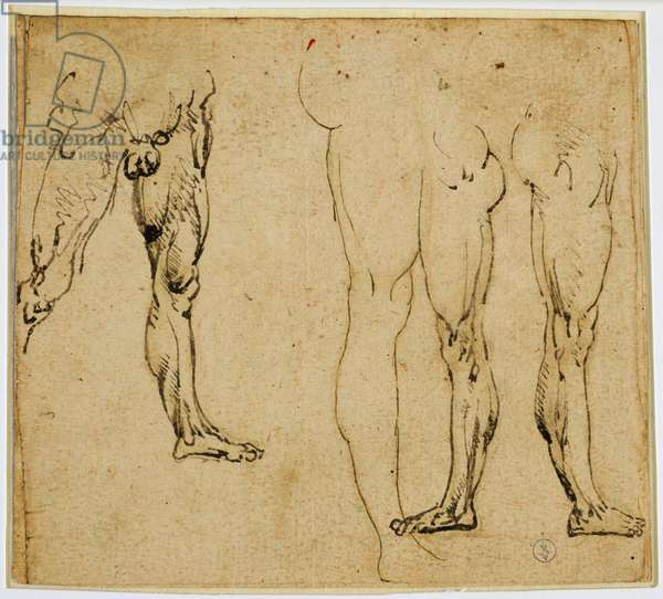Studies of manly legs, c. 1485-1487 (pen and ink, with traces of metal tip on paper)