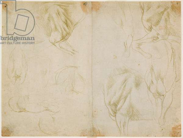 Studies of the musculature of the forelimbs of the horse, c. 1480 (metal tip on prepared light olive green paper)