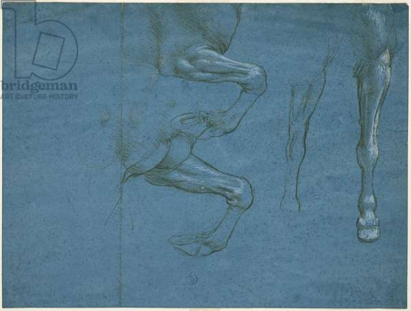 Studies of the forelimbs of the horse, c. 1490 (metallic tip and whitewash on blue prepared paper)