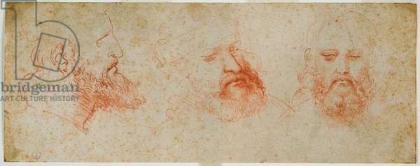 Three views of manly head with beard, c. 1502 (blood on paper)