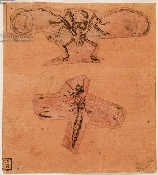 Study of insects, c. 1480 (top drawing) and c. 1503-1505 (bottom drawing) (pen and ink on prepared paper of red, drawings cut out and glued)