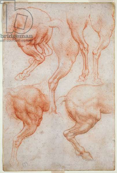 Studies of the hind limbs of the horse, c. 1508 (blood with touches of black pencil on paper)