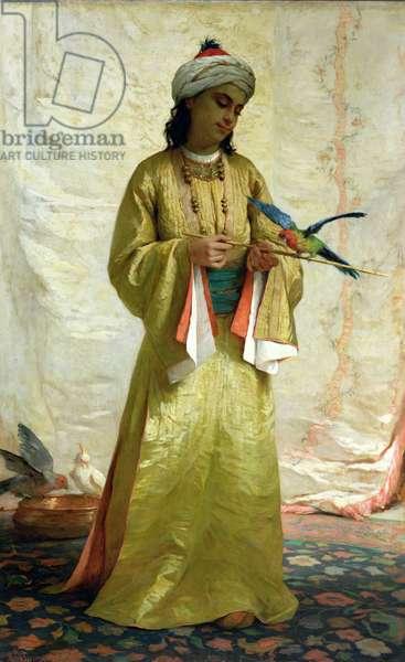 Moorish Girl with Parakeet