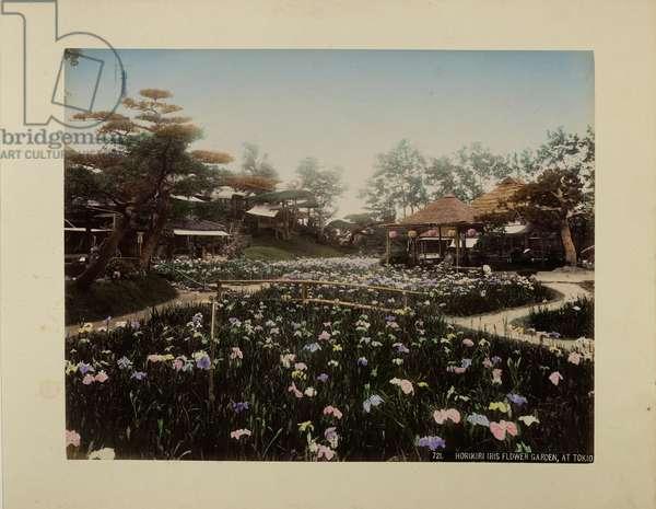 Horikiri Iris Flower Garden at Tokio (hand-coloured photo)