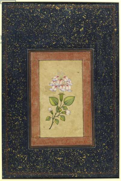 Flower surrounded by an orange and gold border, Delhi, c.1880-1900 (verso of 447416)