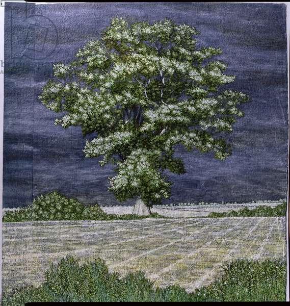 Cazalet Oak, 2004 (mixed media on paper)