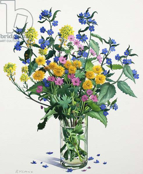 Wild Flowers with Alkanet, 2021 (w/c on paper)
