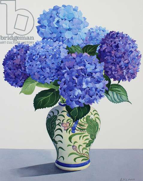 Blue Hydrangeas (watercolour on paper)
