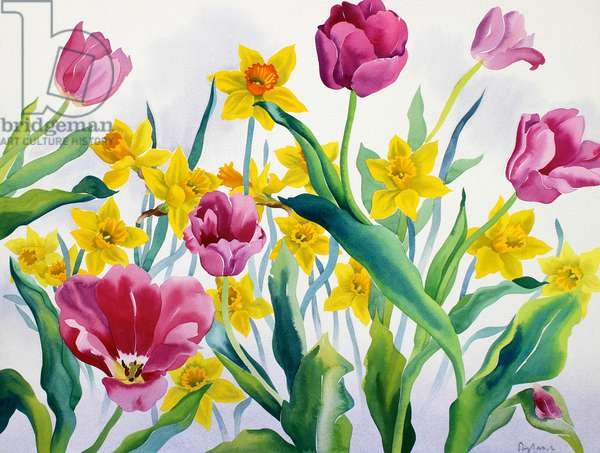 Daffodils and Tulips (watercolour on paper)