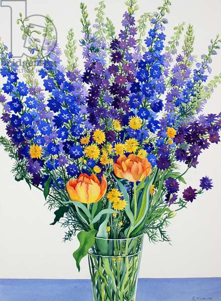 Larkspur and Delphiniums (watercolour on paper)