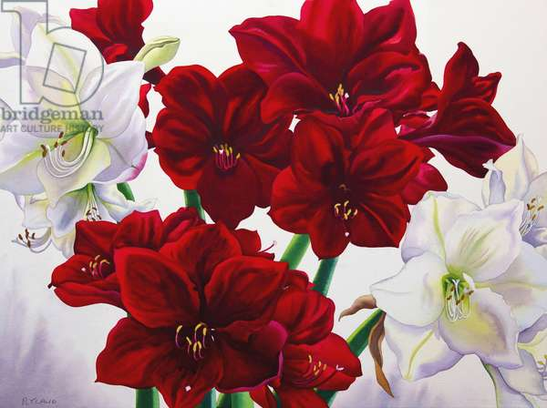 Red and White Amaryllis, 2008 (w/c on paper)