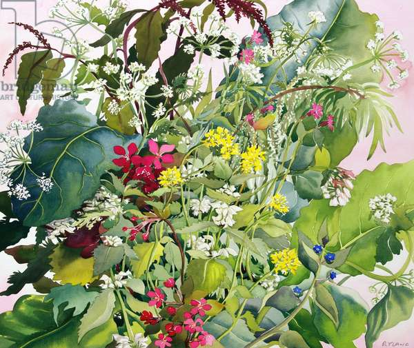 Wild Flowers with Comfrey and Campion (watercolour on paper)