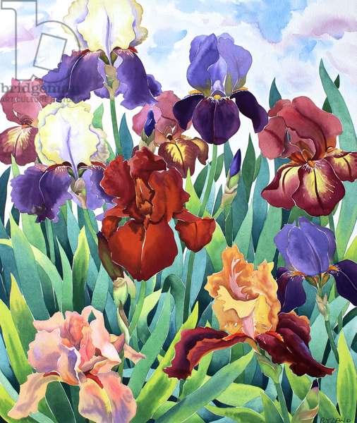 Glemsford Irises