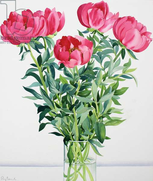 Peonies (watercolour on paper)