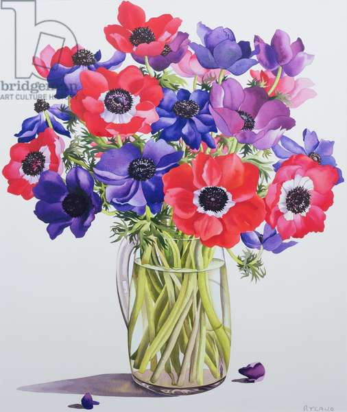 Anemones in a glass jug, 2007 (w/c on paper)