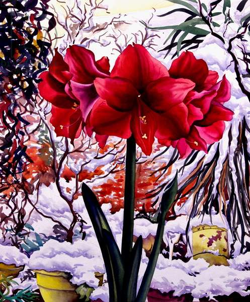 Amaryllis by Snow Window (watercolour on paper)