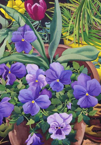 Flowerpots with Pansies, 2007 (w/c on paper)