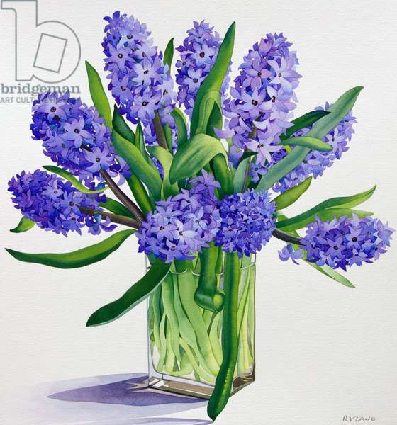 Blue Hyacinths (watercolour on paper)