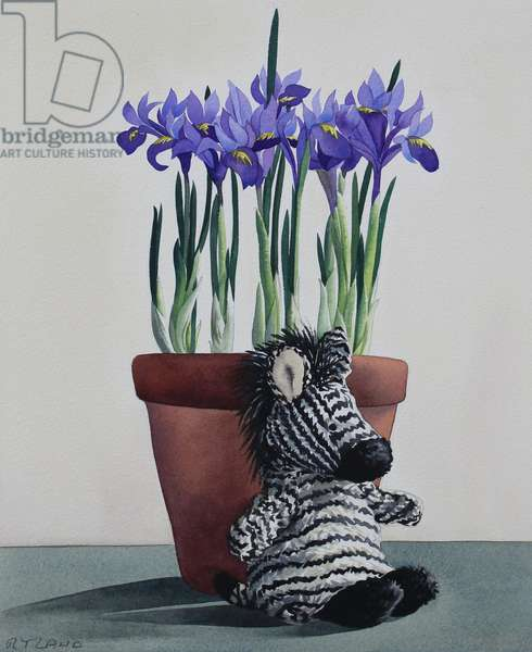 Winter Irises and Zebra
