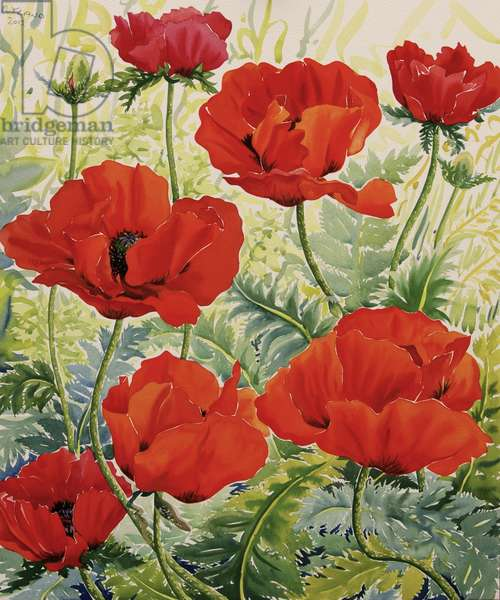 Large Red Poppies (watercolour on paper)