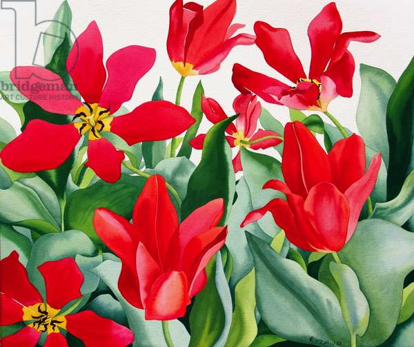 Shakespeare Tulips (watercolour on paper)