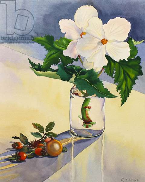 White Begonia and Rosehips