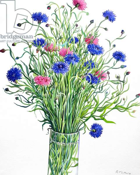 Cornflowers (watercolour on paper)