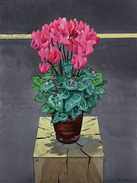 Still Life Cyclamen (watercolour on paper)