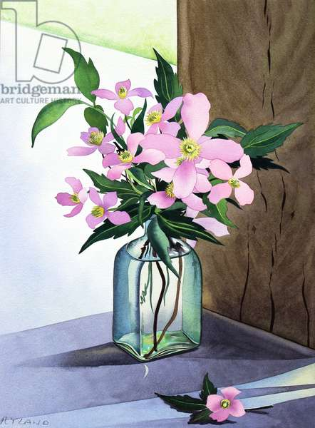 Still Life Pink Clematis (watercolour on paper)