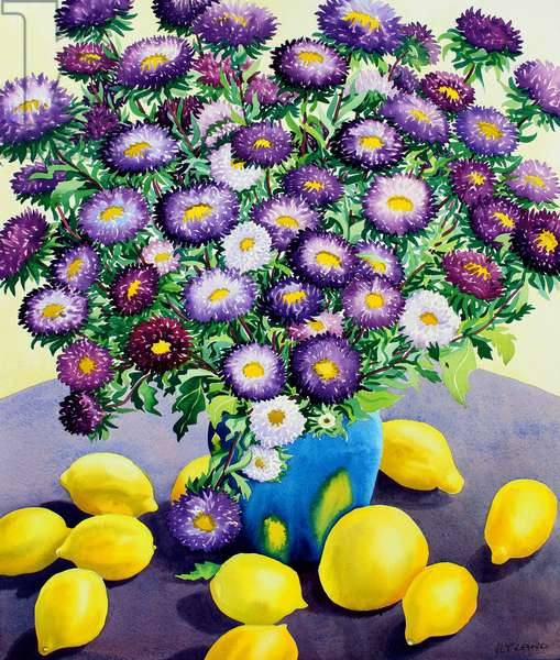 Purple Asters and Lemons (watercolour on paper)