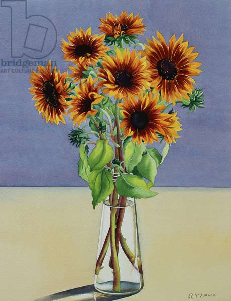 Sunflowers (watercolour on paper)